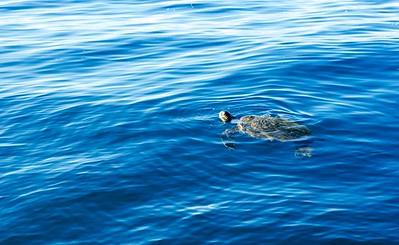 Turtle Lazing