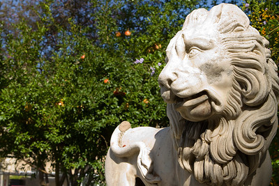 Lion with oranges, Seville