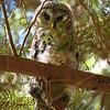 owl-hide-and-seek
