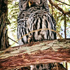 barred-owl-flash-portrait-washington-4