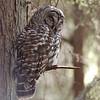 Hoot Owl Catnap