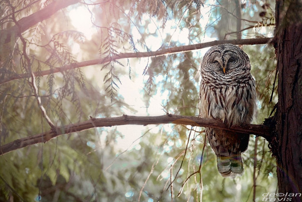 Owl Encounter in the Woods