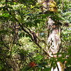 barred-owl-june-25-2017-1