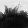 solar-power-sunflower-blazing-flower-flames
