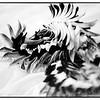 hawaii-bed-flower-lei-bnw
