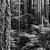 cedar-skinz-barred-life