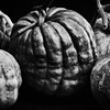 the-great-pumpkin-show-bw