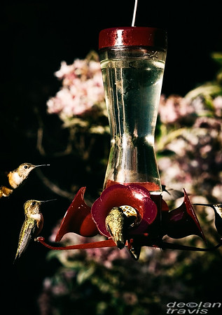 nectar-feeder-hummingbirds-spring-flower