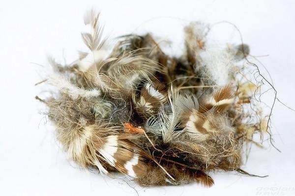 bird-nest-6-edit