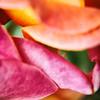 macrolixious-ii-rose-petals