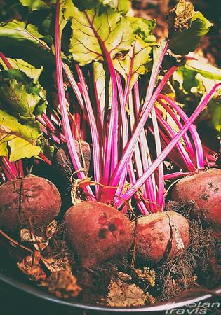 beets-bunch-garden-fresh