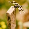 focus-dragonfly-garden