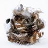 bird-nest-13-edit-2
