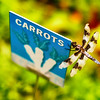 dragonfly-carrots-sign-garden