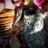 woodpecker-burial-5