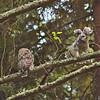 barred-owl-fledgling-stretch-sequence-6-declan-travis