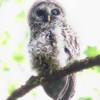Owl-Week-30