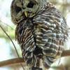 Owl-Week-25