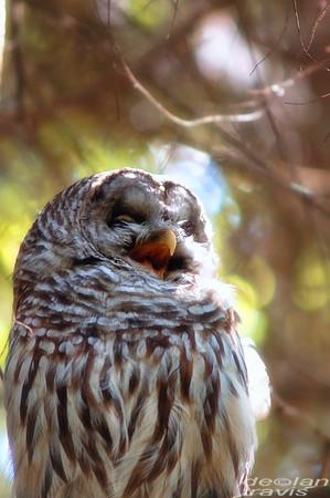 Owl-Week-20