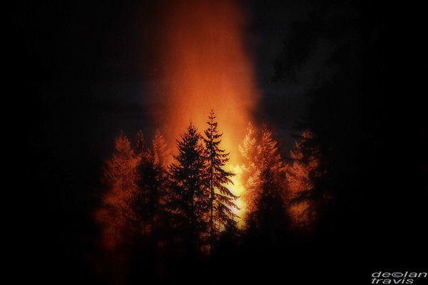 fire-in-the-cedars