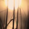 summer-sun-1
