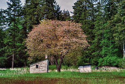 Hammon's Preserve: south Whidbey Island.