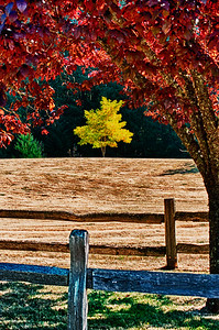 On Coles Road: colorful trees outside Langley, Washington on Whidbey Island.