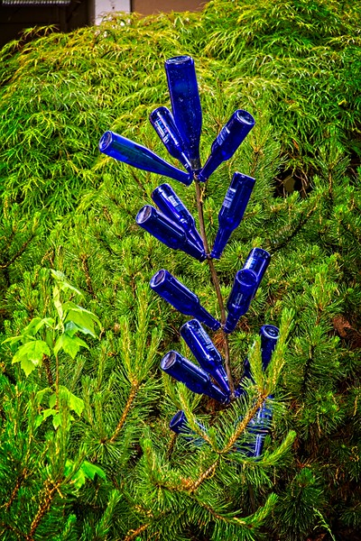A cool blue bottle plant