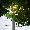 SRf2105_4342_LampTree