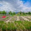 SRf2005_2221_GardenPlots
