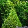 SRf2106_4932_TreeFence