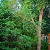 SRf2106_4931_TreeFence