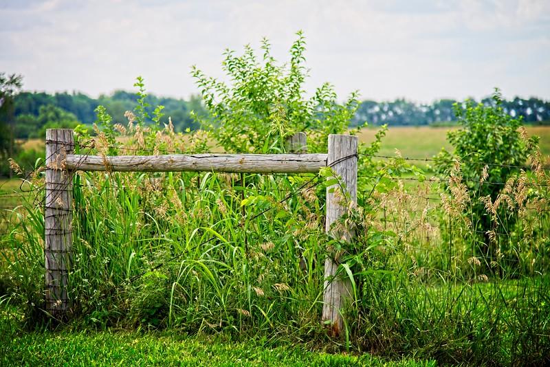 SRe2107_8171_Fence