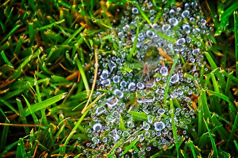 SRf2106_4927_Spiderweb