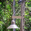 A black bird and a lamp at the park