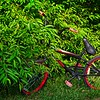 SRf2106_4918_Bike
