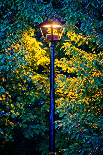 Lighting up the leaves. Lisa and I saw this lamp on our way home from Dance Lessons