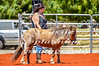 Whim Creek Rodeo-16