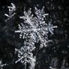Ice Flakes