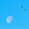 Two Geese Flying over the Moon