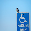 Handicapped Bird
