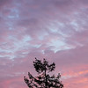 Pine Tree in Silhouette and Pastel Sunset