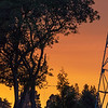 Abstract Study of Silhouetted Trees and Transmission Towers Backed by Sky Colored by Wildfire Smoke
