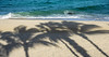 Palm Tree Shadows