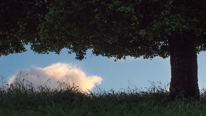 Evening Cloud and Silhouetted Tree and Grass