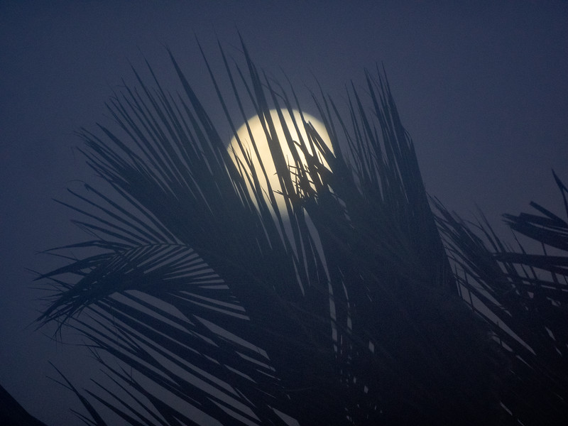 Near-Full Moon Obscured by Palm Tree Fronds, 6:00pm, Feb 17 2019