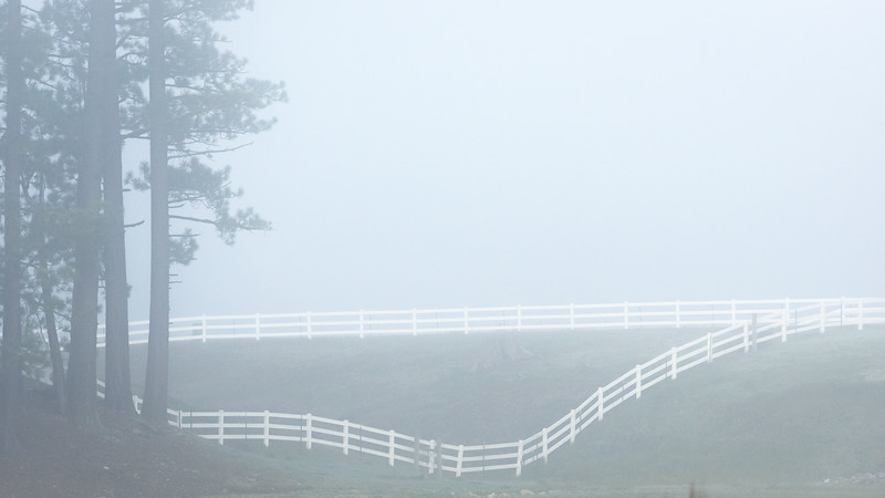 Horse Fence and Pines on Foggy Morning