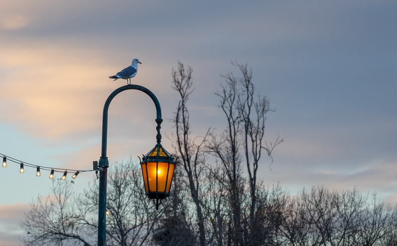 Seagull, Lantern, Lights, and Early Morning Clouds