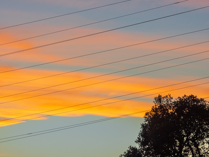 Wires, Tree, and Orange Clouds from Nearby Wildfire