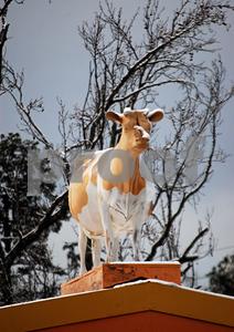 Cow Store snow crop 300 1